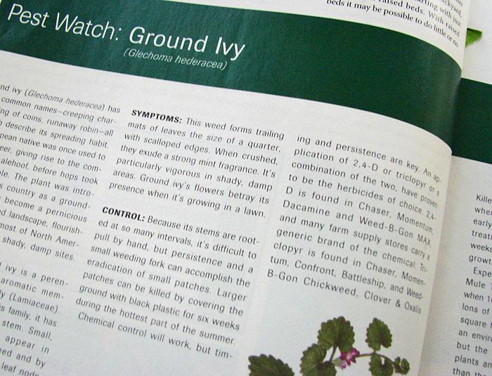 Ground-ivy,-pest-watch